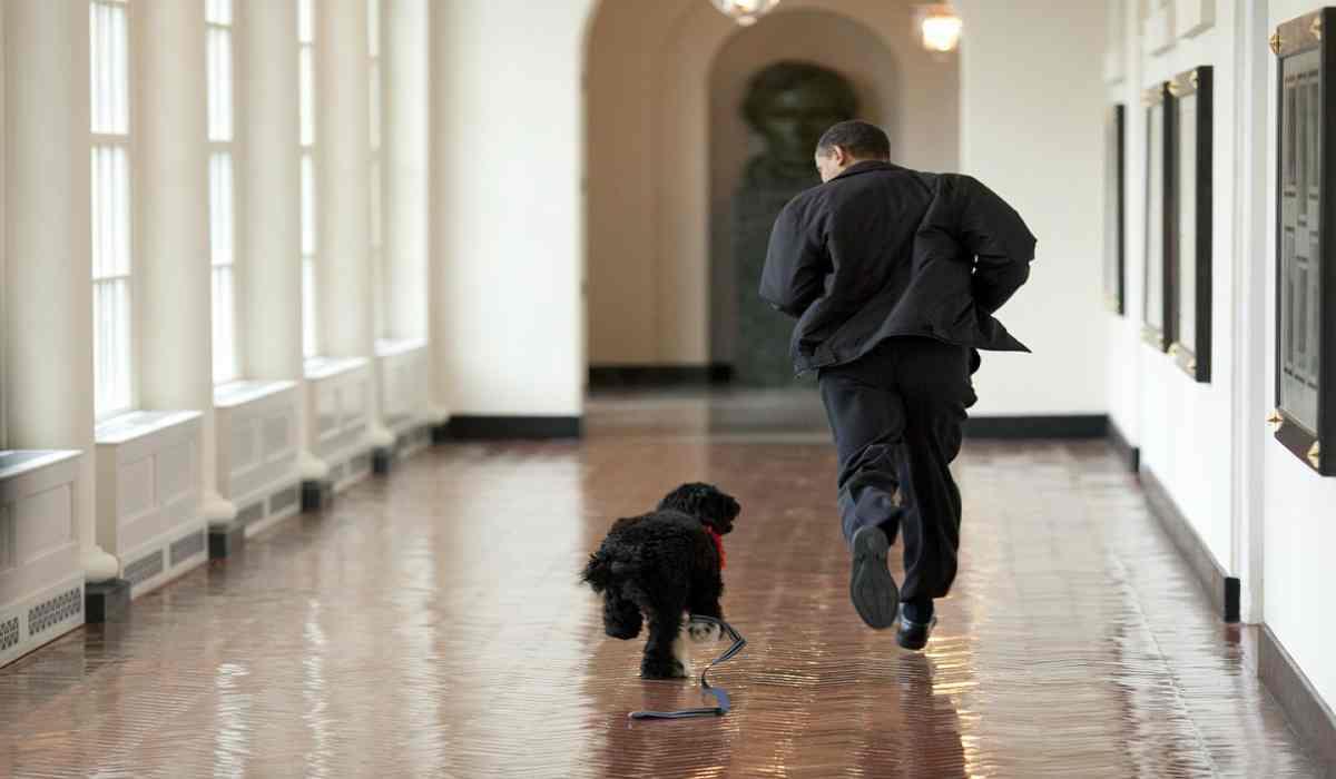L'allegria del padrone e del cane in ufficio (Foto Pixabay)