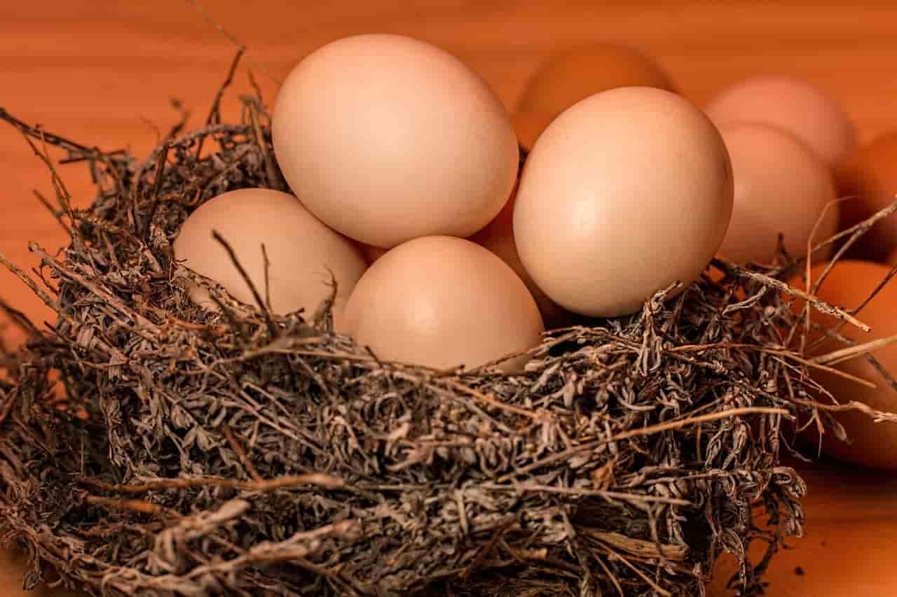 benefici uova per cane