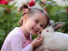 curiosita sul coniglio