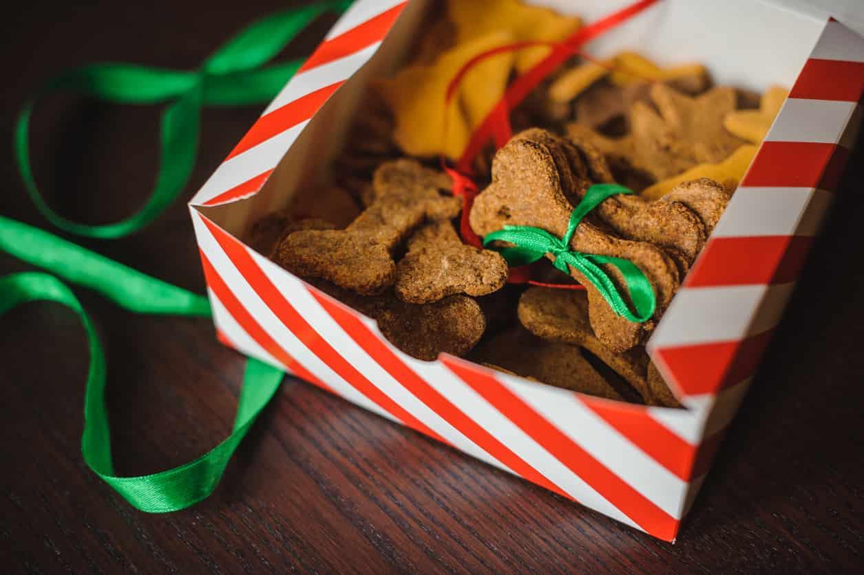 biscotti natalizi cane
