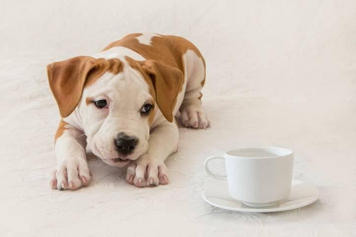 cucciolo beve caffe