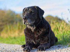 rimedi naturali cane anziano