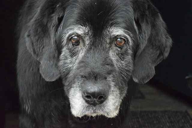 Il cane fantasma e la sua missione Facebook