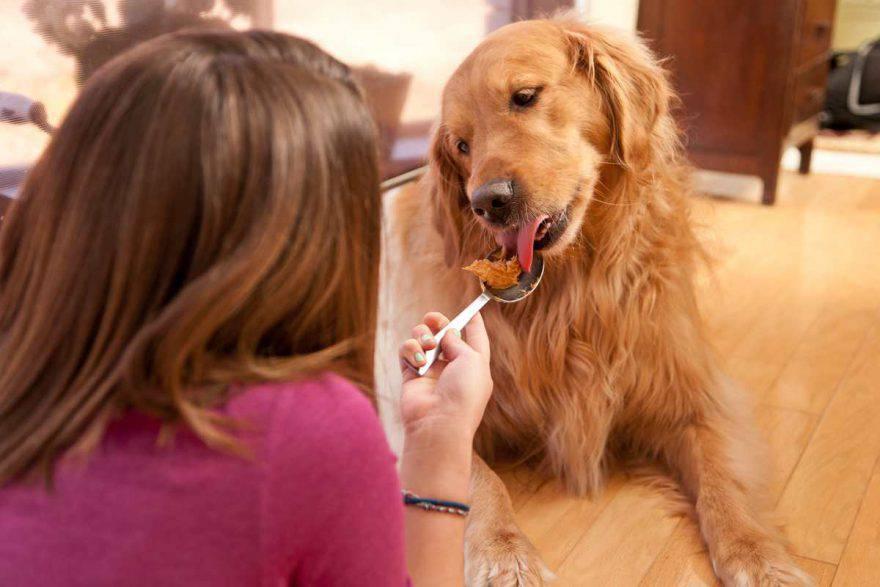 cane mangia burro di arachidi