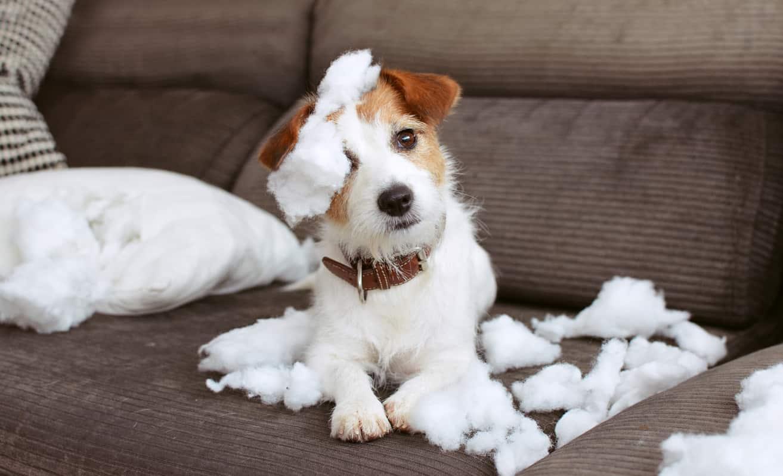 cane fa dispetti