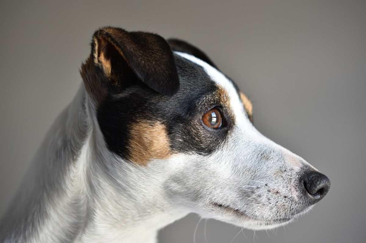 i cani vedono i fantasmi