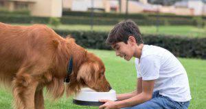 Cane e bambini in famiglia