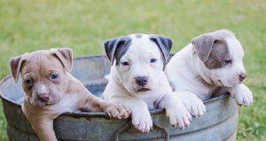 Nomi di cani femmine e maschi con la S