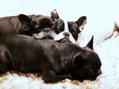 Nomi di cani femmine e maschi con la Y