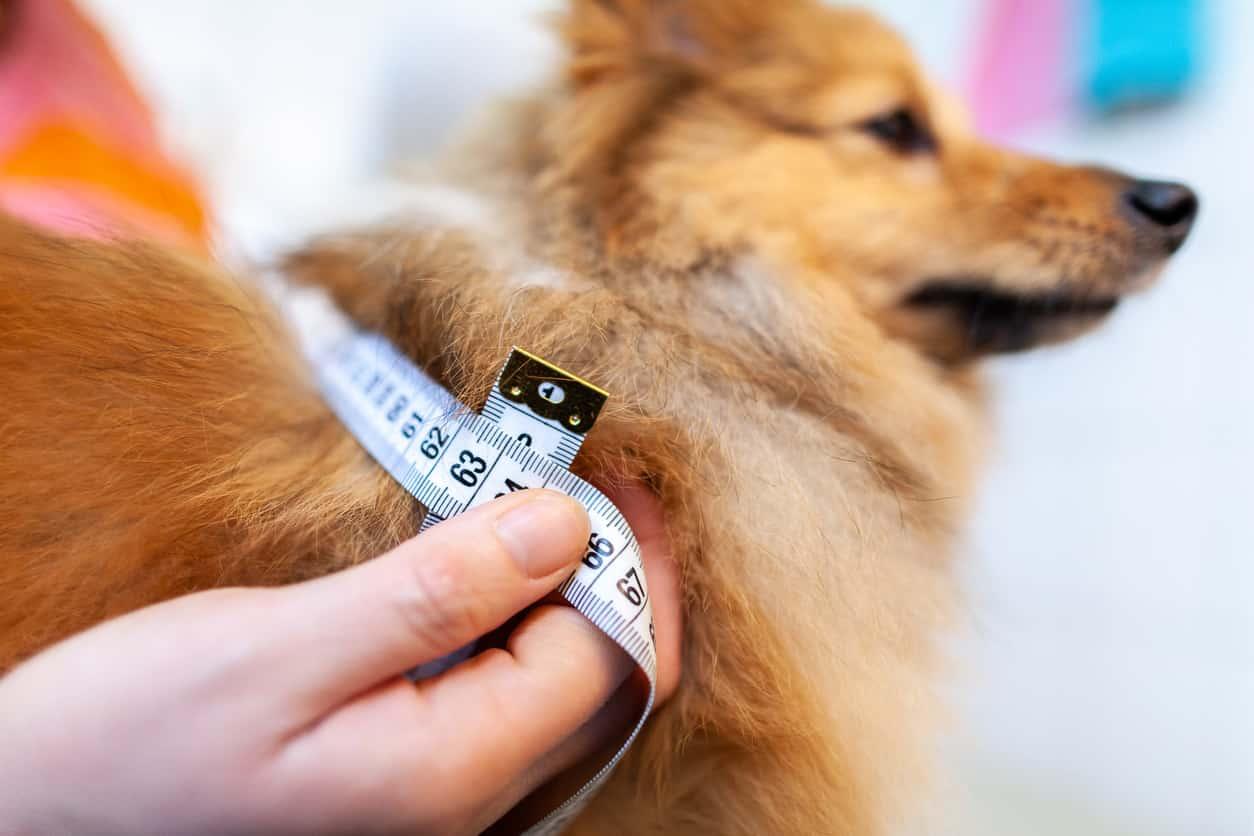 Alimentazione del cane diabetico