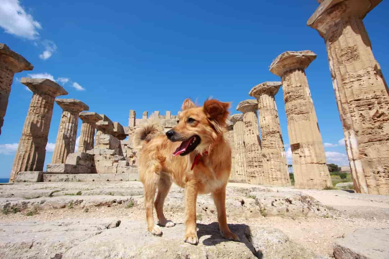 Nomi di cani mitologici
