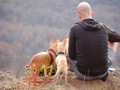 Nomi di cani e natura