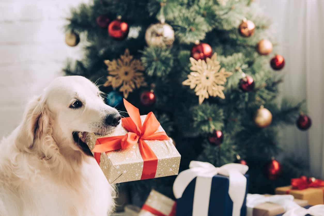 Cane e pericoli di Natale