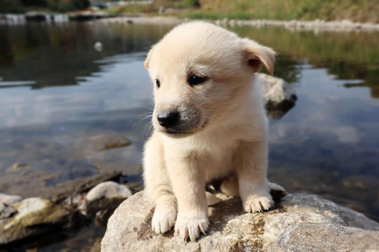 Nomi di cani bianchi