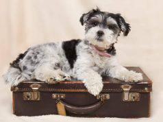 nomi di cani, viaggi e geografia