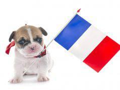 Nomi francesi per cani