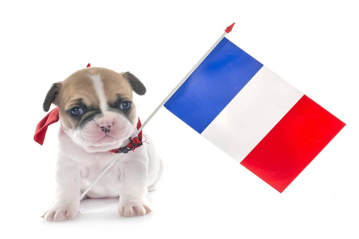 cani francia