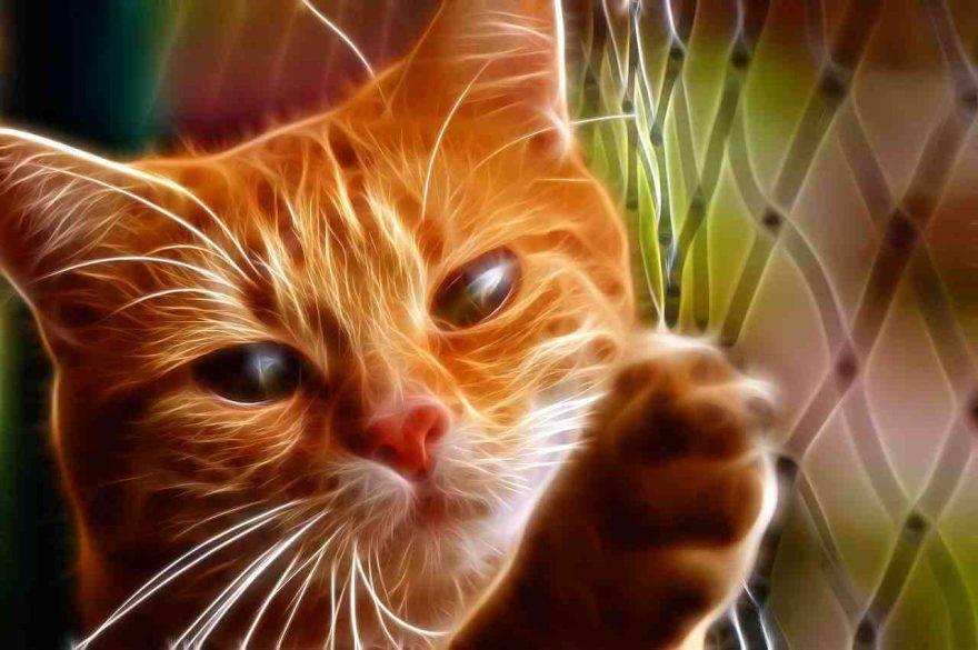 Uveite nel gatto