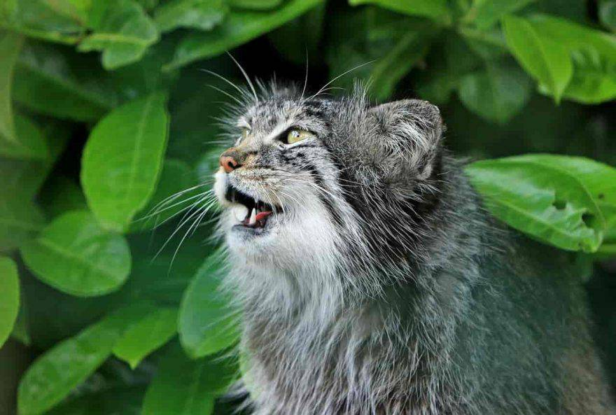 gatto anziano fasi vecchiaia