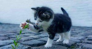 La tenerezza del micio (Foto Pixabay)