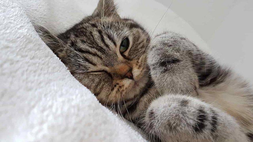 gatto fa occhiolino