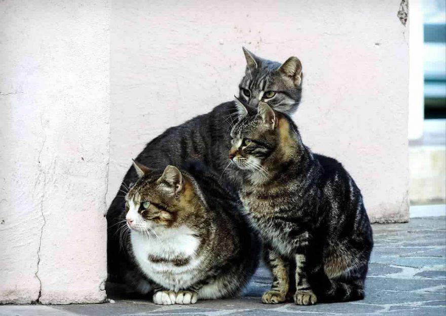 gatti comune di napoli