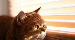 Gatto cieco