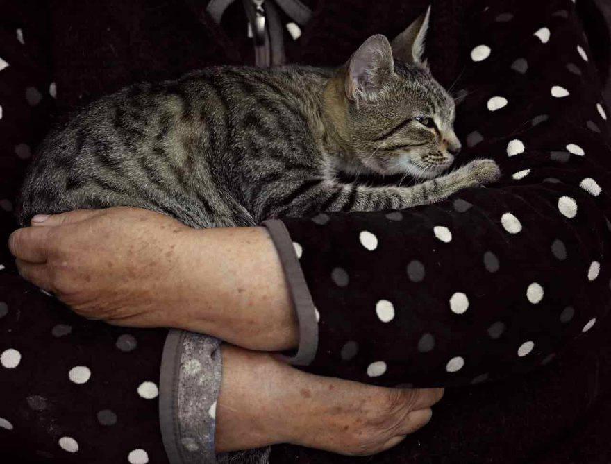 dolore cronico gatto