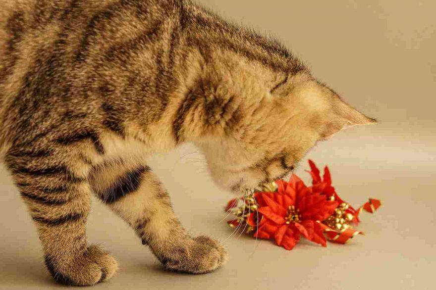 Il gatto ha mangiato la stella di Natale