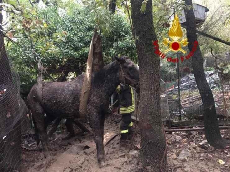 cavallo soccorso