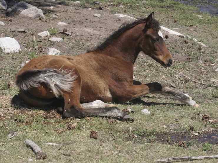 cavallo malato inverno