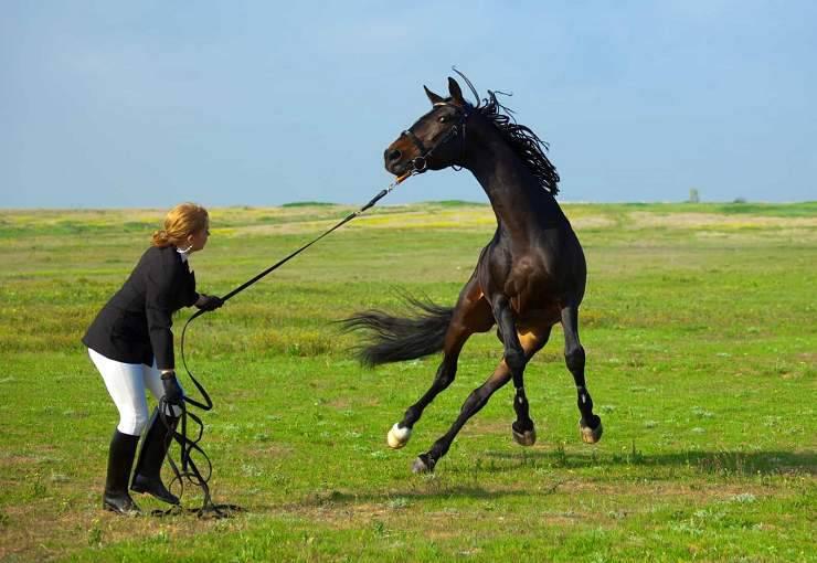 cavallo incidenti
