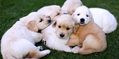 tenerezza cuccioli