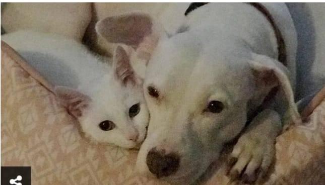 Amicizia tra cane e gatto (Foto Instagram)
