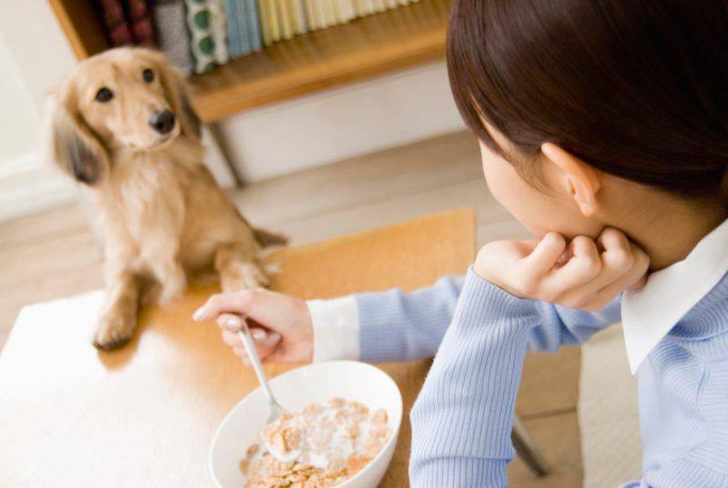 cane puo mangiare i cereali