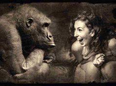 Scimmia domestica