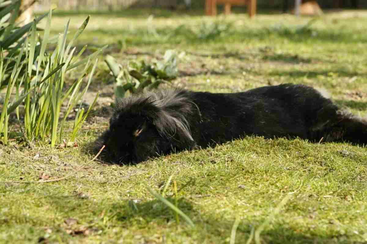 Il coniglio si finge morto