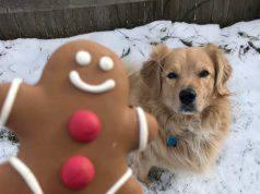 dolci natalizi cane