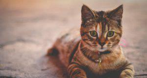 proverbi modi di dire gatti