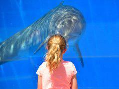 delfino pixarbay