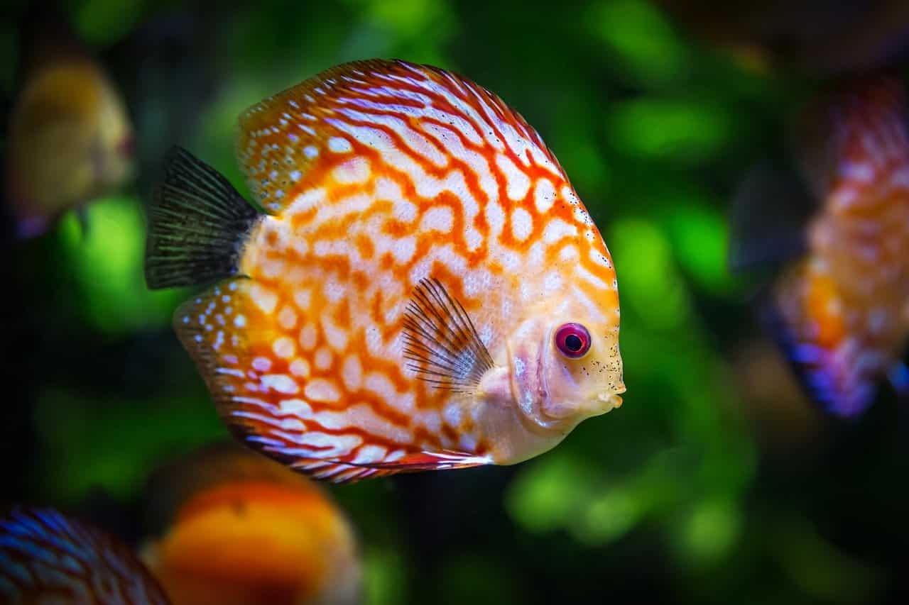 I colori dell'ambiente marino (Foto Pixabay)