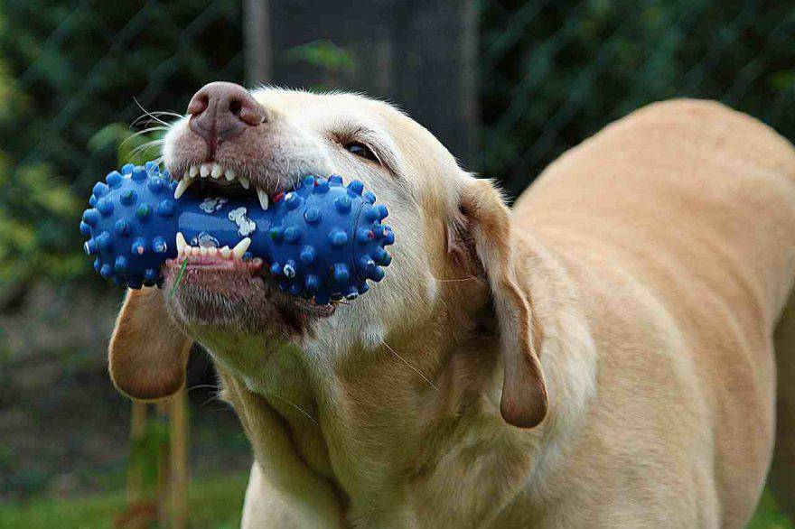 Il cane ha mangiato la plastica