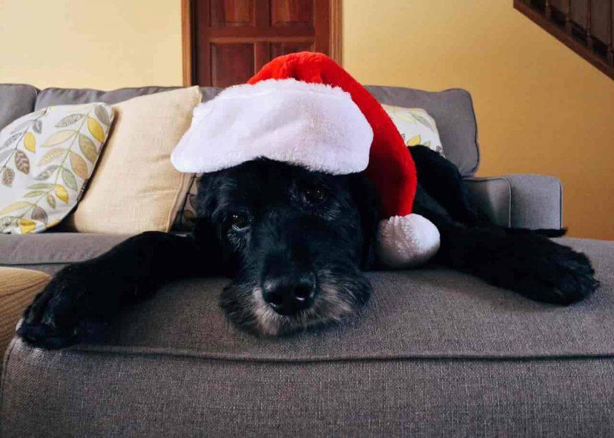 regali natale fai da te cani