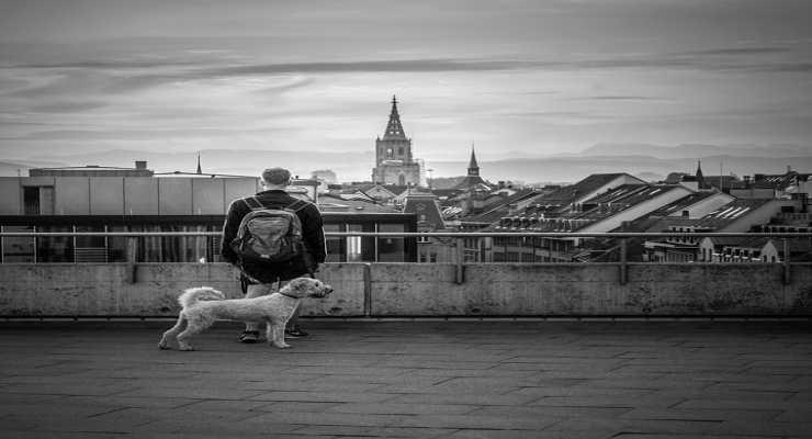 Il cane e il padrone insieme al lavoro (Foto Pixabay)