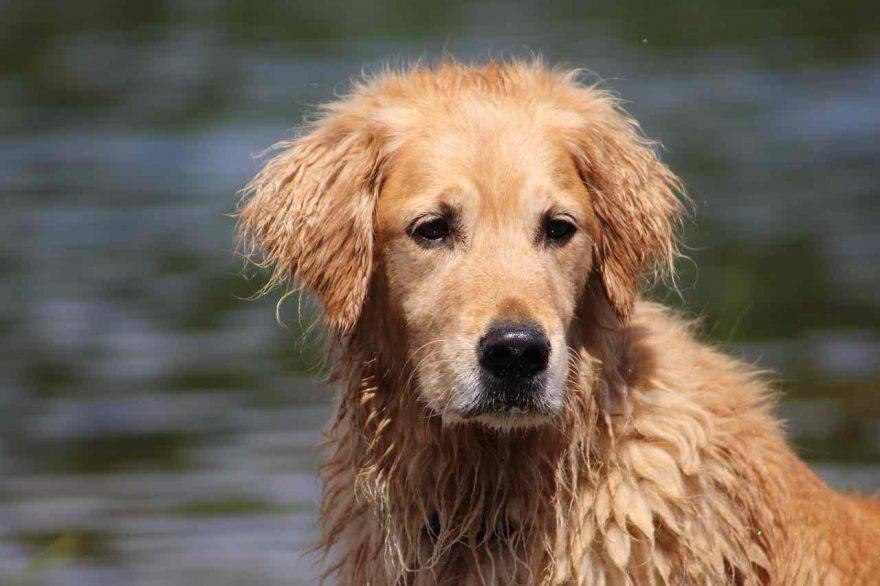 Malattia di Lyme nel cane