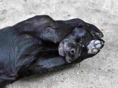 Eczema nel cane