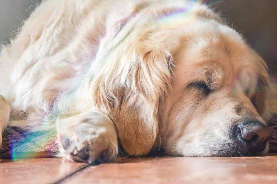cane in fin di vita