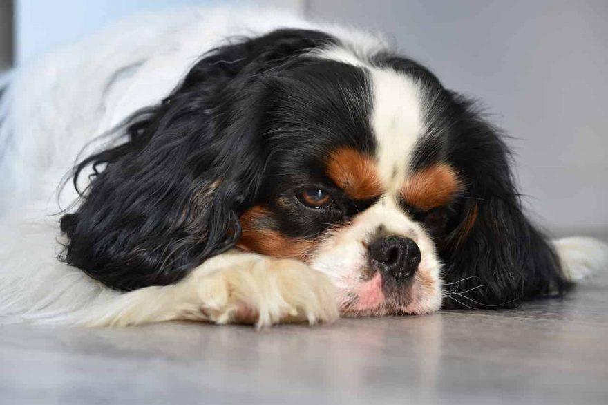 cane depresso cause