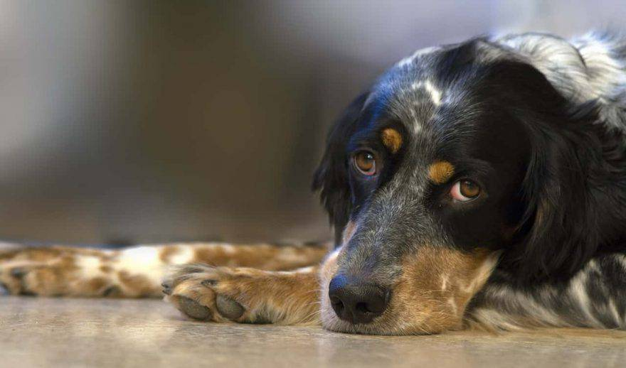 malattie neurologiche cane sintomi