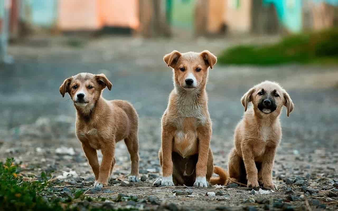 Cuccioli (Foto Pixabay)